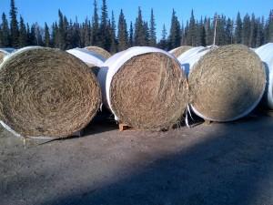 hay round